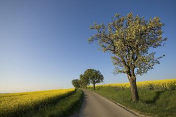 la route du colza