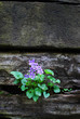 violets on a wall with copy space