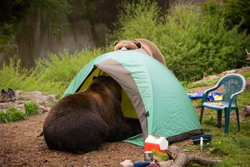 bear tent camp