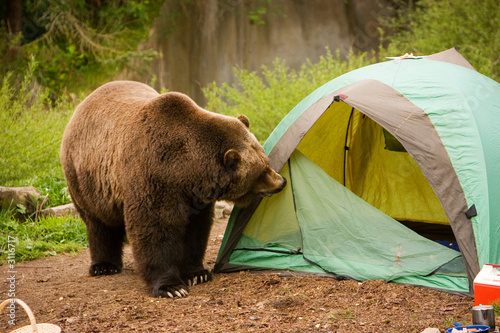 Fotobehang Dragen camping