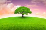 Fototapety arbre sur prairie