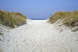 pathway in dune poster