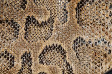 snake texture detail