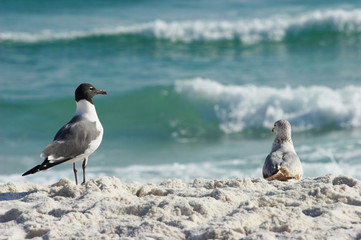 pair of oceanside seagulls
