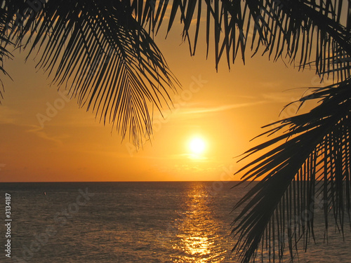 sunset through the palm trees over the caraibe sea, roatan islan