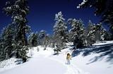 Fototapeta cross country skier