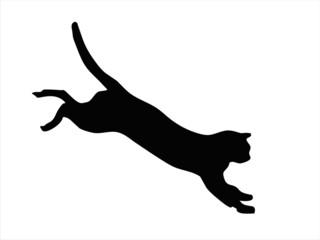 Wild cat jumping