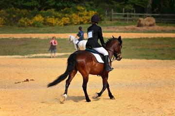 cavalier et cheval au trot