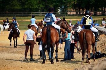 chevaux et compétition