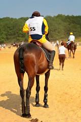 compétition cheval