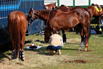 soins des chevaux