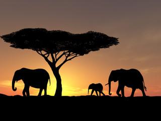 family of elephant