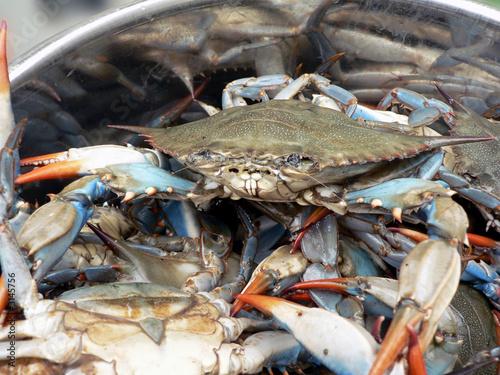 crab - blue crabs in pot 2 - 3145756
