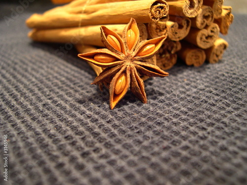 flor de la canela y rama