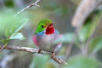 oiseau multicolore