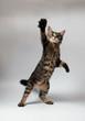 roleta: ly_cat_01