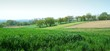grass and orchards