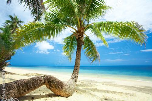 Zdjęcia na płótnie, fototapety na wymiar, obrazy na ścianę : twisted palm