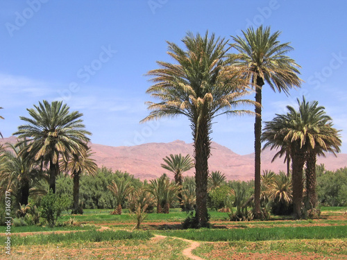 oasis in the desert with the red mountains in the background, ti