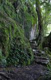 rainforest path poster