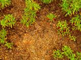 chão molhado com plantas verdes poster