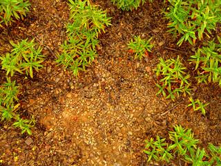 chão molhado com plantas verdes