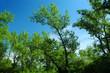 tree opposite blue sky