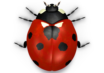 ladybug red top view
