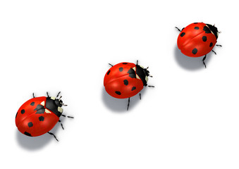 three red ladybugs