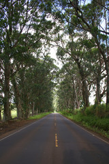 tree-covered road