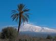 paesaggio etna con palma