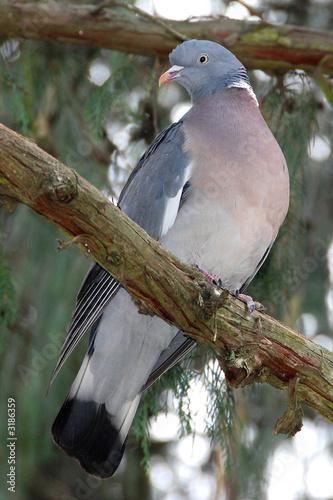 Fotobehang colombo