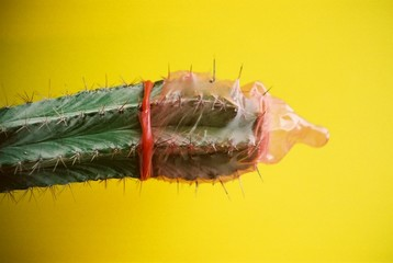 condom on a cactus