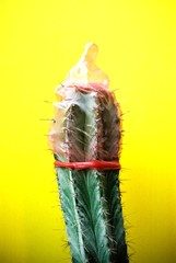 condom on a cactus
