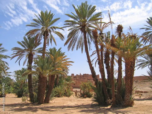 desert oasis with palm trees, zagora, draa valley, morocco
