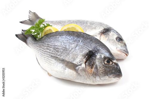 dorada ryb