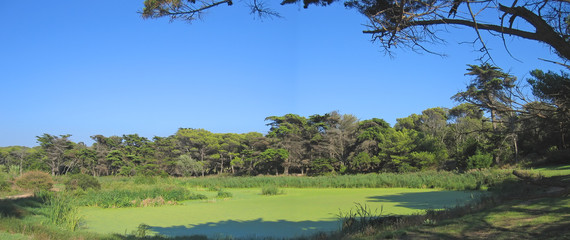 green swamp inside the countryside, porquerolles island, azur co