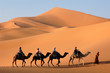 canvas print picture - camel caravan in the sahara desert
