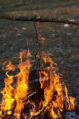 kettle in the fire