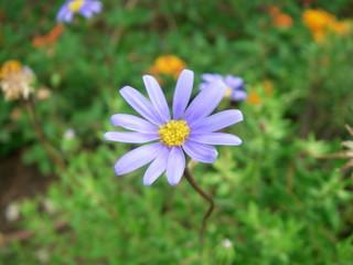 petite fleur violette