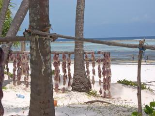 dry seaweed on an african tropical beach, zanzibar, tanzania