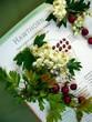 medicinal herbs - crataegus oxyacantha