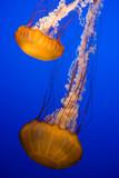 medusas orange poster
