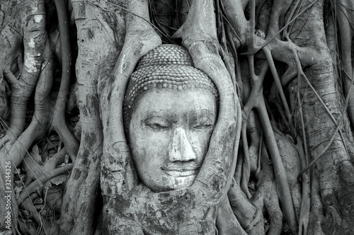 Leinwanddruck Bild buddha