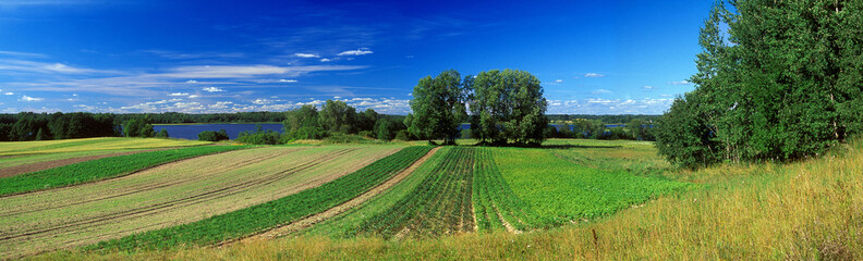 panoramic country side summer picture