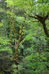 in dark wet forest