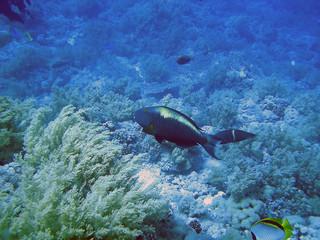 pez y fauna