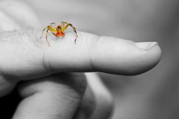 spider on man's finger
