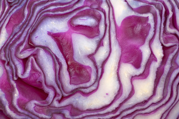 red cabbage background