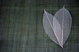transparent leaves poster